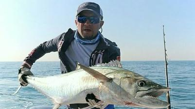 King Mackerel (Kingfish)