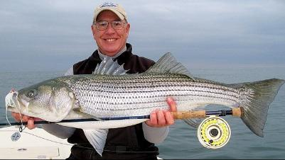 Striped bass(saltwater)
